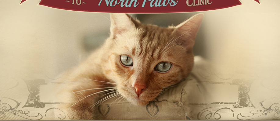 North Paws Veterinary Clinic