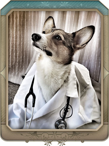 Emergency Veterinary Care in Maple Grove
