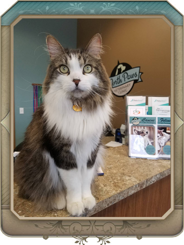 maple grove veterinary hospital